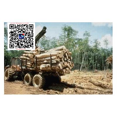 澳洲檀香木 檀香精油原木出口批发商